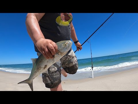 Bluefish Surf Fishing NJ