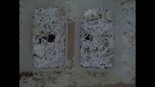 How to Raise Dermestid Beetles (Growing a Colony)