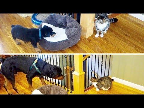 Rottweiler puppy vs Grown up PART 2!!  22