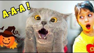 КОТЫ на ХЭЛЛОУИН! ЛУЧШИЙ НЕ ЗАСМЕЙСЯ ЧЕЛЛЕНДЖ! Funny Cats Halloween Попробуй не засмеяться Валеришка