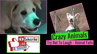 Crazy Animals Compilation - Try Not To Laugh - Animal Fails
