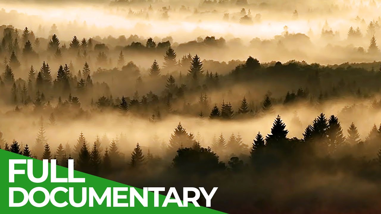 Northern Woods - A Tribute to the Ancient Forests of the North | Free Documentary Nature