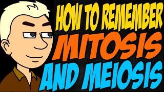 How to Remember Mitosis and Meiosis