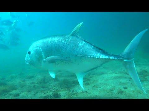 Chasse sous marine - Madagascar 2016