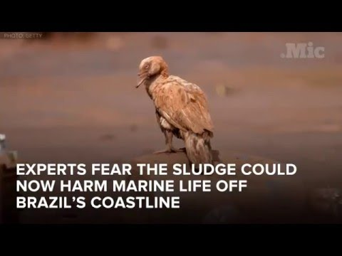 Environmental Disaster in Brazil - The Worst Environmental D