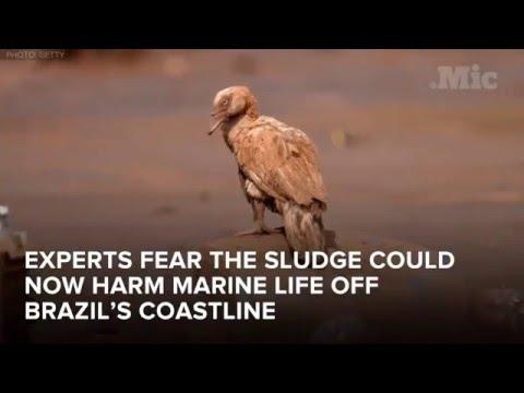 Environmental Disaster in Brazil - The Worst Environmental Disaster in its History