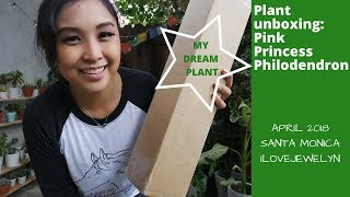 Plant unboxing: Pink Princess Philodendron | APRIL 2018 | ILOVEJEWELYN
