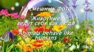 14 смешных фото. Животные ведут себя как люди/ Animals behave like humans