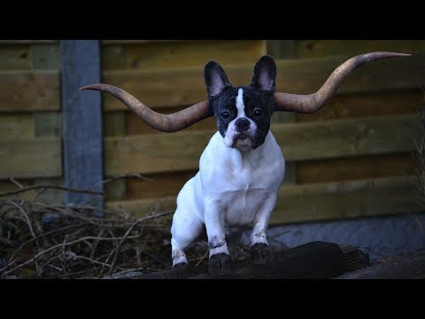 Top 10 Weirdest Dogs In The World - Top 10 Weirdest Dog Breeds - Aspin