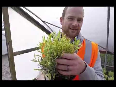 Plant Patrol Episode 4-17-19