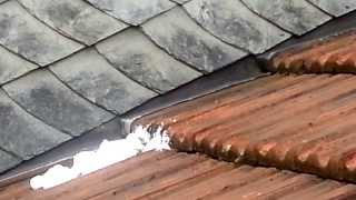 Wespennest im Dach kurz nachdem der Kammerjäger da war