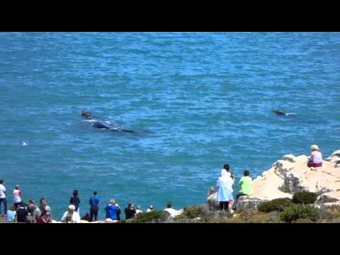 Land Based Whale Watching in Hermanus!