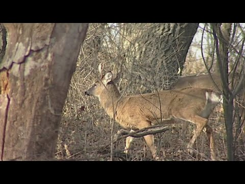 Simple Safety Tips For Deer Hunting Season