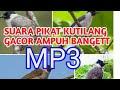Suara Pikat Kutilang Gacor Ribut Ampuh Untuk Segala Jenis Burung Kecil  Mp3 - Mp4 Download