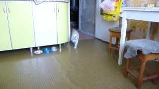 Кошка Маруся