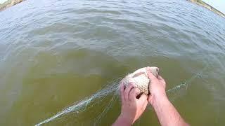 ОГРОМНЫЕ КАРАСИ Рыбалка сетями