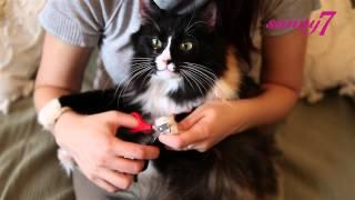 Как стричь когти коту