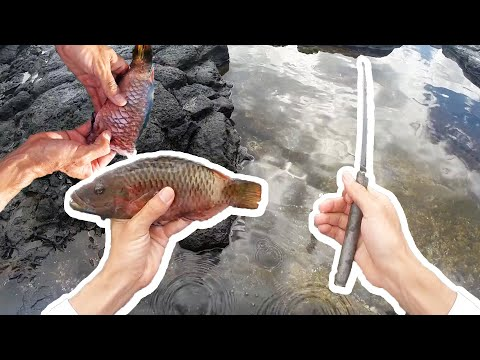 How To Clean A Reef Fish / Cleaning A Fish Tutorial