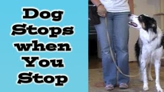 Dog Stops When You Stop: Loose Leash Walking Online Class