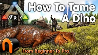 Ark HOW TO TĄME A DINOSAUR Everything You Need To Know To Start Taming In 2020 #ARK
