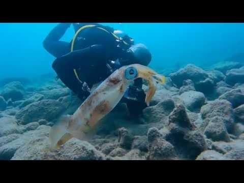 Cesarea ancient harbor Squid show