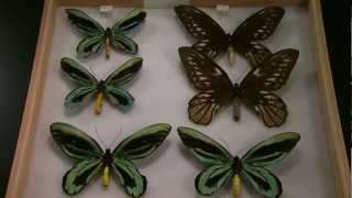 Cal Academy Butterfly Collection: Science on the SPOT