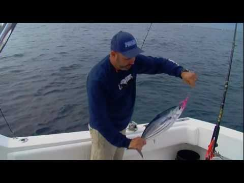 Hard Fighting Great Tasting Super Trolling Action With Powerful SkipJack Tuna - FSFTV