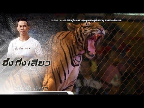 คนสั่งเสือ!!! | อึ้งทึ่งเสียว | 04/11/17 | ช่อง8