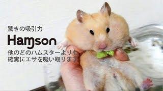 ハムソン驚きの吸引力!他のどのハムスターより確実にエサを吸い取ります!おもしろ可愛いハムスターfunny hamster is dyson