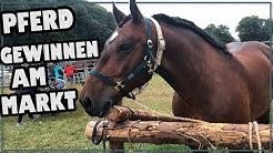 Pferd gewinnen am Pferdemarkt ✮