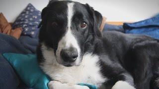 Vaarwel Lieve Hond!