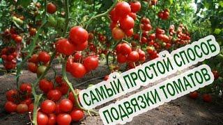 Как подвязывать помидоры. Подвязка помидор. Подвязывать томаты. Помидоры выращивание(Видео рассказывает о том, как правильно и чем лучше подвязывать томаты в теплице. Как подвязать помидоры..., 2016-03-13T19:16:13.000Z)