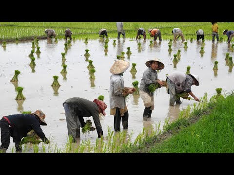 Quality investments from Lao PDR organic contract farming in Patxong province Short version)