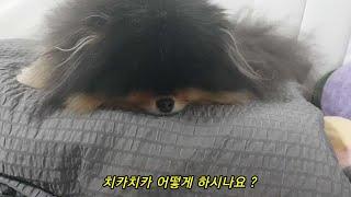 강아지 치아관리(영유아용 물티슈)