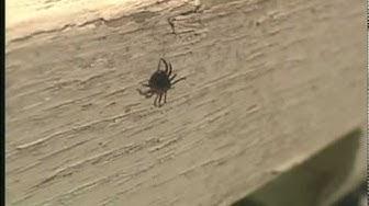 Ticks & Disease: Lyme & Colorado Tick Fever - Orkin Pest Control