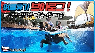 여름휴가 브이로그 가평오블리 애견펜션 수영장부터 서울까…