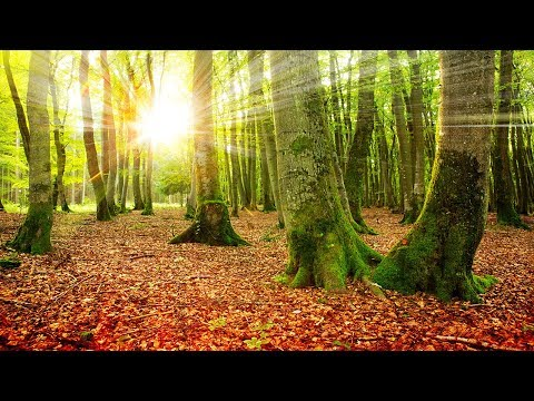 Healing Meditation Music, Relaxing Music, Music for Stress Relief, Background Music, ☯3354