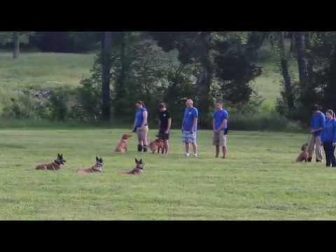 Worlds Elite Dog Trainer Academy.  The Tom Rose School.