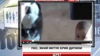 Собака з Youtube імітує крик дитини