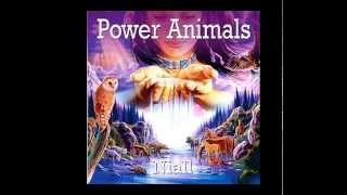 The Bear (Power Animals)