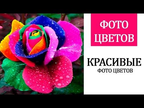 Роза в песке | Объемная сушка цветов