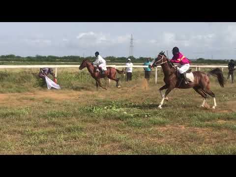 Best Racing Horse in Ghana