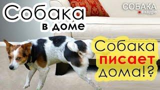 видео Как отучить собаку гадить дома/ отучить щенка метить