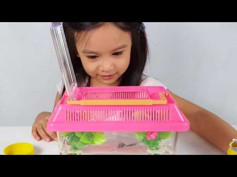 Kids First Pet Guppy Fish! Funny Kid React | Ayra's fun Time