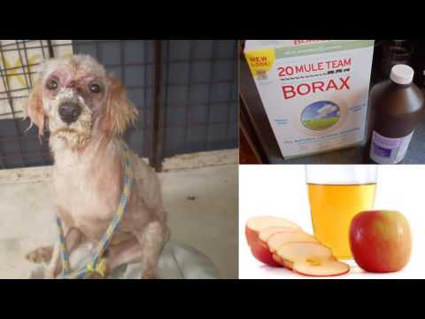 How To Cure Mange In Dogs | Home Remedies For Dog Mange!!