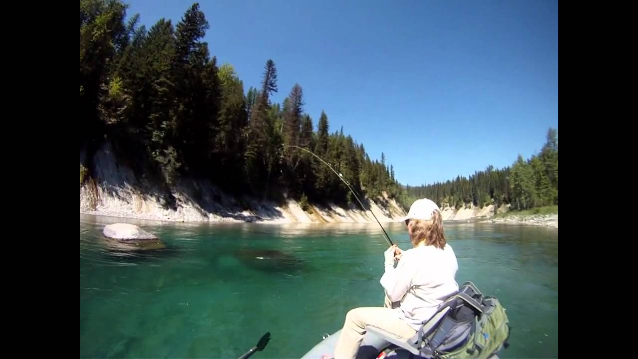 Fly fishing glacier national park flathead river for Fly fishing glacier national park
