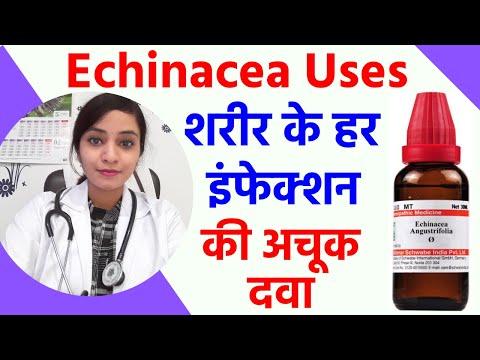 echinacea angustifolia | echinacea mother tincture | echinacea uses & symptoms