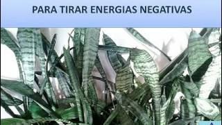 BANHO DE LIMPEZA PARA TIRAR ENERGIAS NEGATIVAS