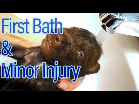 Day 2: Minor Puppy Injury | Newborn's First Bath!