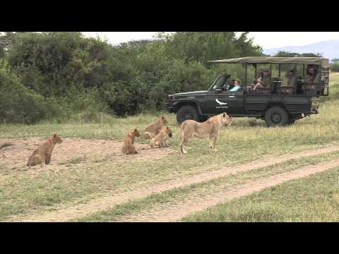 The Serengeti Lion Safari Film Trip - Photos of Africa